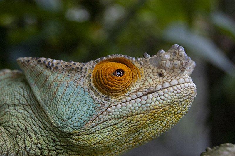 Madagascar amphibians